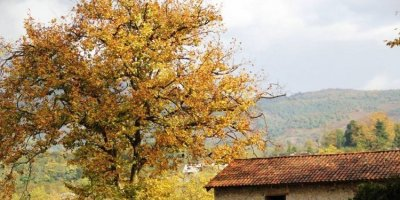 Autumn in Martvili