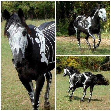 ცხენი ოთხფეხა ჩლიქოსანი ძუძუმწოვარი ცხოველი. ცხენები დიდი ხნის განმავლობაში ეკონომიკურად ყველაზე მნიშვნელოვანი მოშინაურებული ცხოველები იყვნენ და განსაკუთრებულ როლს ასრულებდნენ ადამიანთა და ტვირთის ტრანსპორტირებაში ათასობით წლის განმავლობაში.