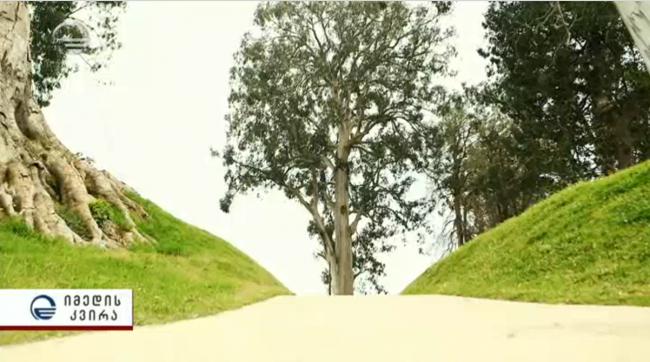 """ხეების """"გადარჩენის"""" ამბავი იმედზე"""